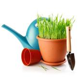 Pots, Seeds & Plants